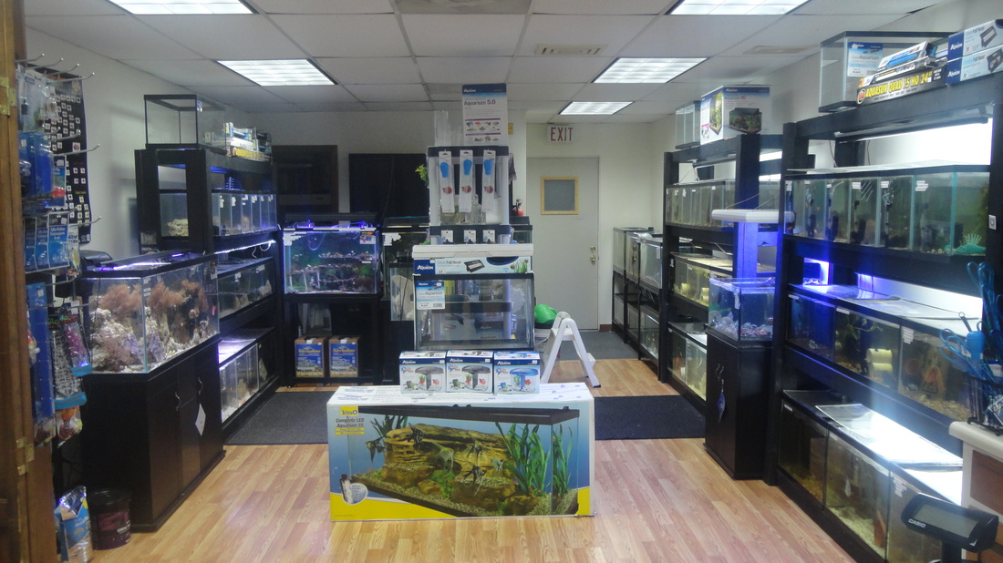 Location alex 39 s advanced aquatics for Salt water fish store
